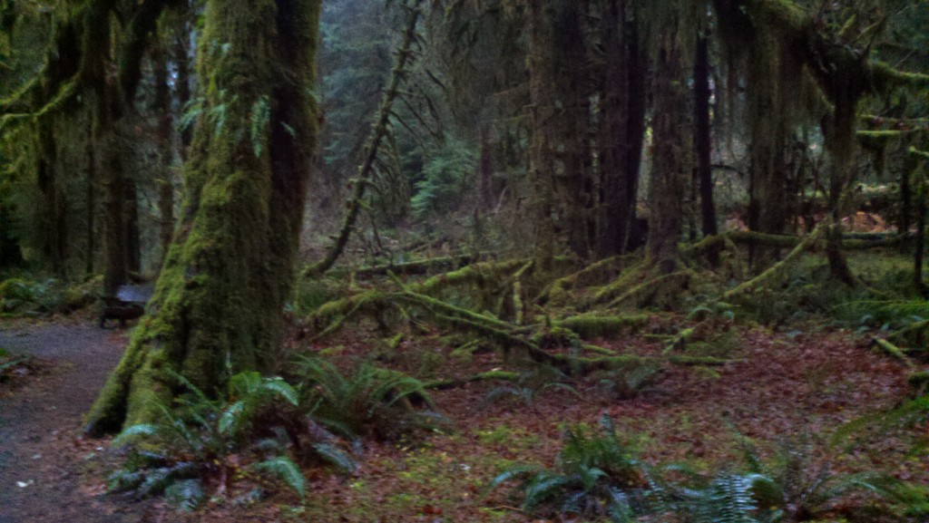 Hoh Rainforest November 2011